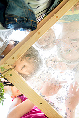 School children studying herbs on a sifter - p300m2160388 von Fotoagentur WESTEND61