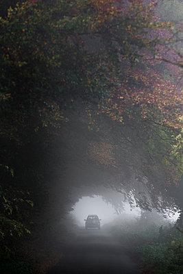 Durch Bäume - p1057m1179087 von Stephen Shepherd