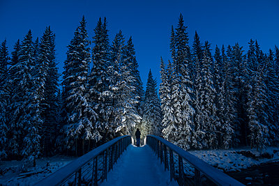 Rear view of hiker walking on footbridge towards forest - p1166m1486077 by Cavan Images