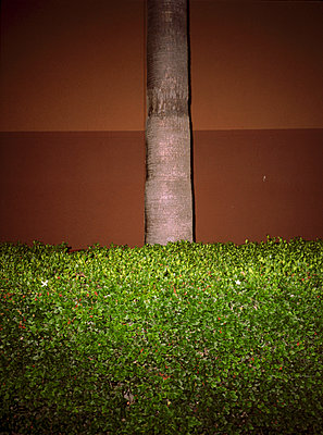 Trunk - p1177m1002800 by Philip Frowein