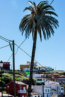 Palm tree and electric cable - p161m902890 by Kerstin Schomburg