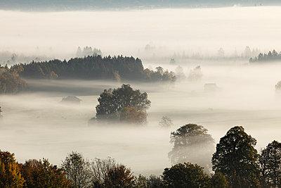 View of tree in fog - p300m660010f by Martin Siepmann