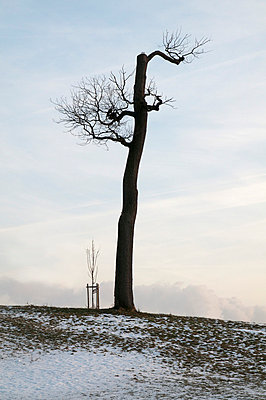 Young and old tree - p1710277 by Rolau