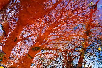 Abstract view through branches - p1072m828896 by chinch gryniewicz