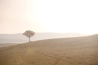 Sonnengruß - p7980147 von Florian Loebermann