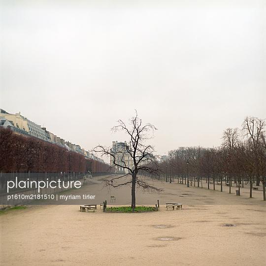 Solitary tree at the jardin des Tuileries in Paris - p1610m2181510 by myriam tirler