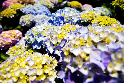 Group of flowers - p1084m1118671 by GUSK