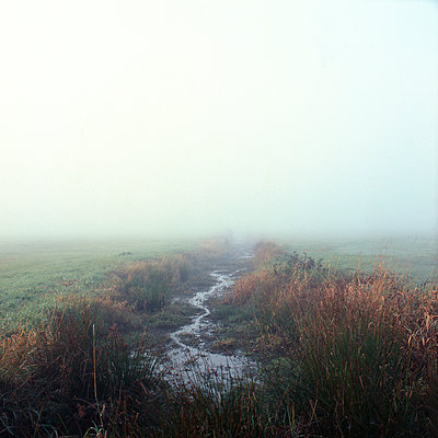 Morning - p1186m972797 by Christine Henke