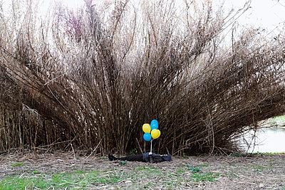Liegender Mann hält Luftballons - p1521m2157618 von Charlotte Zobel