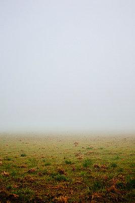Feld im Nebel - p946m938932 von Maren Becker