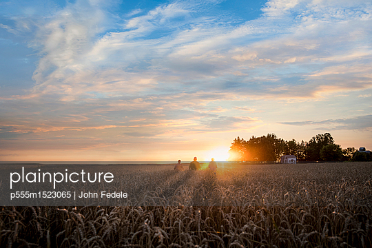 Distant Caucasian men in field of wheat at sunset - p555m1523065 by John Fedele