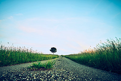 Single tree next to gravel road  - p1312m2116864 by Axel Killian