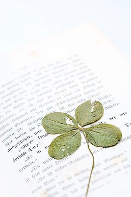 Kleeblatt im Buch - p2480516 von BY