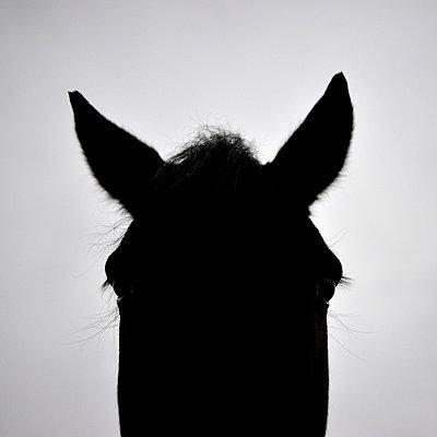 Pferd - p8290239 von Régis Domergue