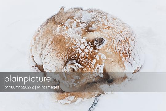 p1100m1520272 von Mint Images