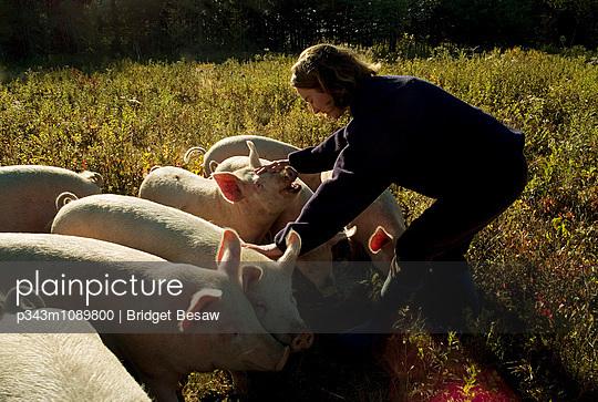 p343m1089800 von Bridget Besaw