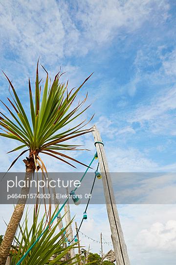 Palme und Lichterkette - p464m1574903 von Elektrons 08