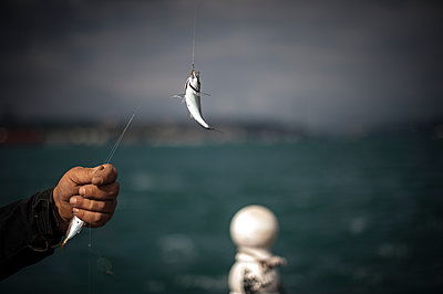 Fish and hand of a fisherman - p1007m1134827 by Tilby Vattard
