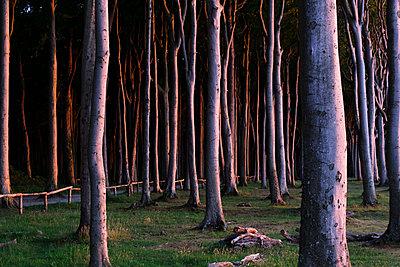 Buchenwald an der Ostsee Küste - p1600m2230781 von Ole Spata