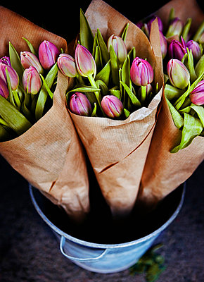 Tulips - p312m672788 by Bruno Ehrs