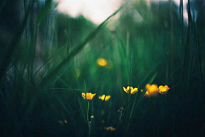 Grass - p1002m740765 by christian plochacki