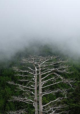 Toter Baum - p1229m2099107 von noa-mar