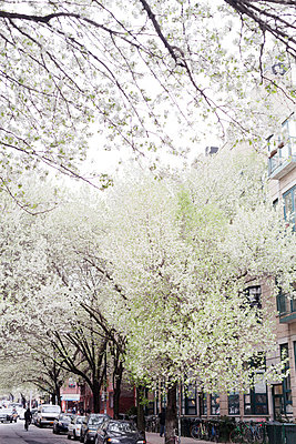 Blossoming trees - p9560003 by Anna Quinn