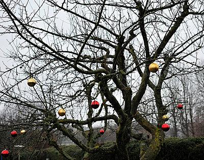 Geschmückter Obstbaum - p1180138 von Daniel Sadrowski