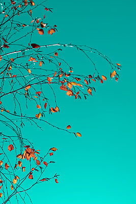 Autumn foliage - p1228m2220141 by Benjamin Harte