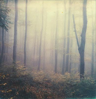 Wald - p1421m1476786 von Simon Fröhlich