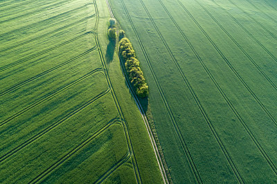 Germany, Mecklenburg-WesternPomerania, Aerial view of dirt road between green vast wheat fields in spring - p300m2144621 by Martin Rügner
