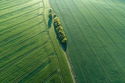 Aerial view dirt road with trees through green wheat fields. Mecklenburg-Vorpommern, Mecklenburg Western Pomerania, Germany. - p300m2144621 von Martin Rügner