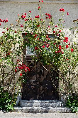 A door overgrown with roses, Sweden. - p5755333f by Fredrik Schlyter
