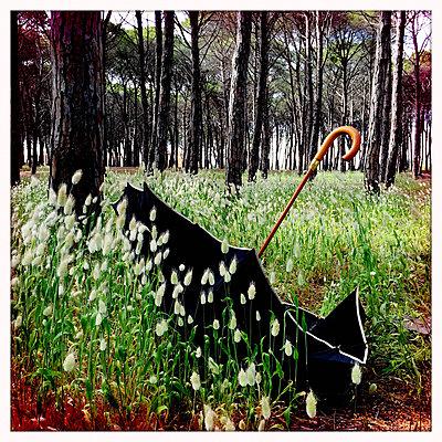 Regenschirm im Kiefernwald  - p979m1220436 von Ulrike Schacht