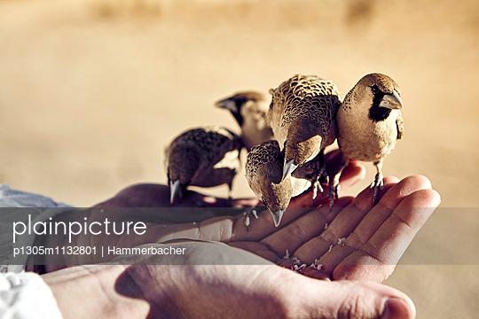 Weaver bird - p1305m1132801 by Hammerbacher