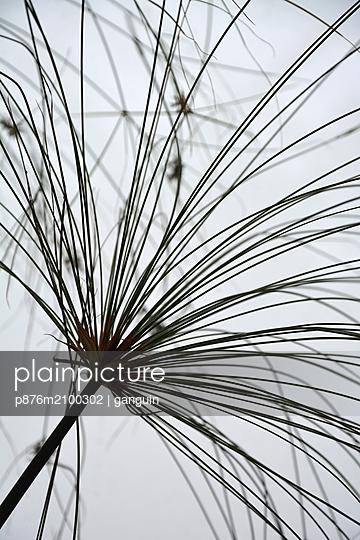papyrus - p876m2100302 by ganguin