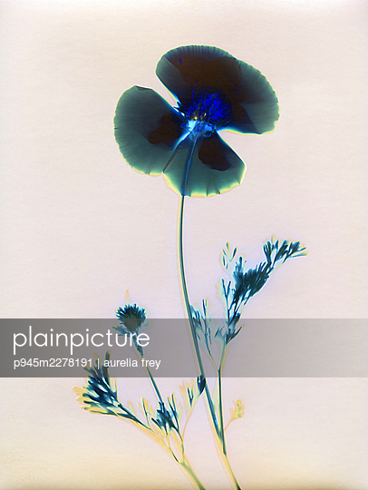 Pressed flower - p945m2278191 by aurelia frey