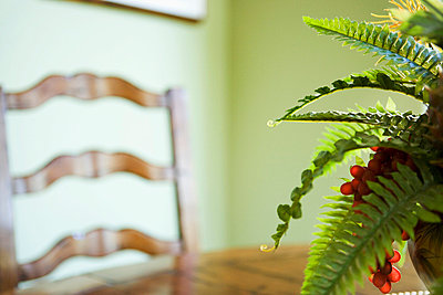 Fern on Dining Table - p5550167f by LOOK Photography