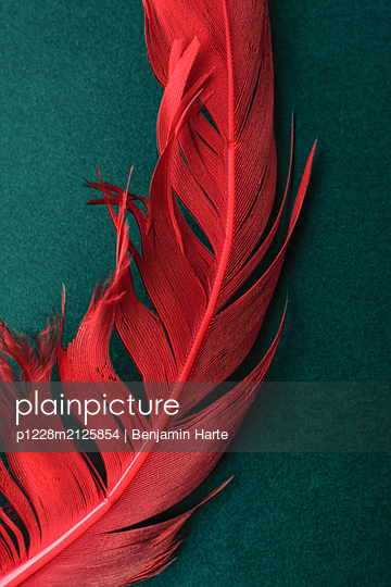 Red feather - p1228m2125854 by Benjamin Harte