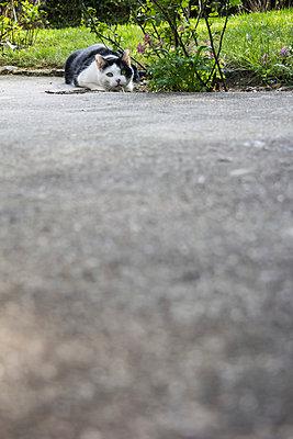 Katze lauert - p739m900784 von Baertels