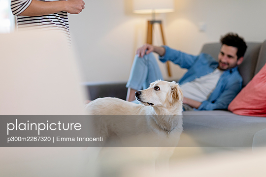 Cute white dog looking at owner in living room at home - p300m2287320 by Emma Innocenti