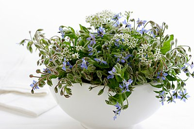 Borage and garlic chive flowers in a bowl - p1183m996315 by Schindler, Martina