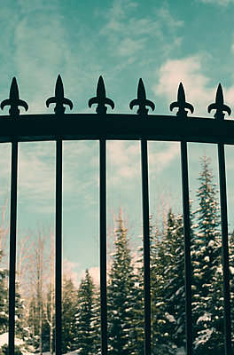 Iron Fence in Front of Snowy Trees - p1617m2264087 by Barb McKinney