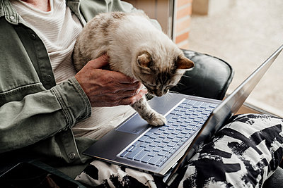 Senior man holding cat over laptop at home - p300m2281376 by VITTA GALLERY