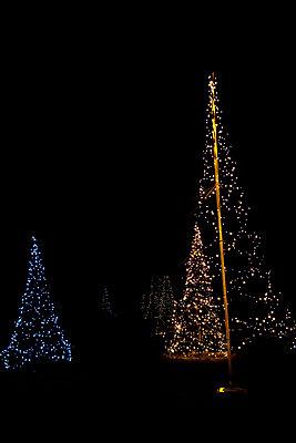 Electric Christmas trees - p533m1104413 by Böhm Monika