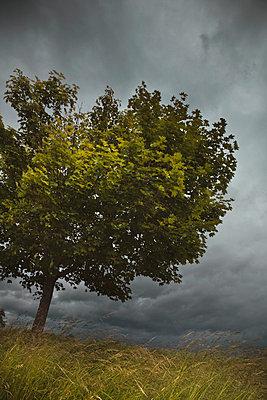 Sturm - p6470088 von Tine Butter