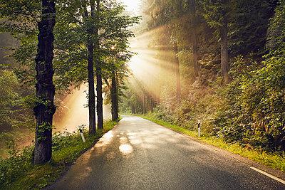 Nationalpark Sächsische Schweiz  - p1200m1171168 von Carsten Görling