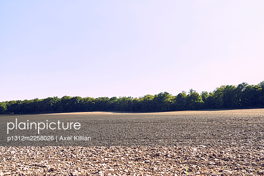 Field with edge of woods in summer - p1312m2258026 by Axel Killian