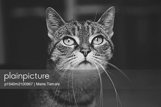Gestromerte Katze - p1540m2100967 von Marie Tercafs