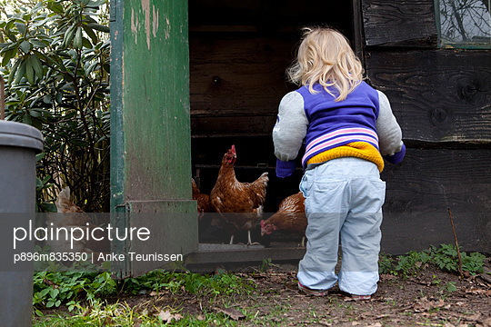 Little girl by chicken house - p896m835350 by Anke Teunissen
